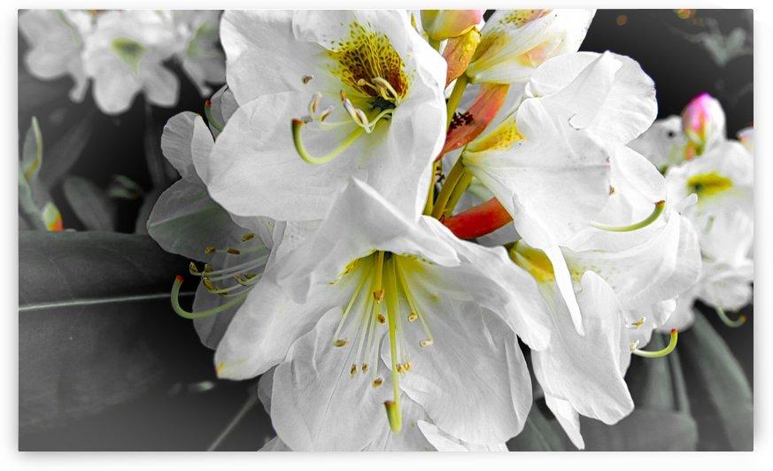 Flower I by Flodor