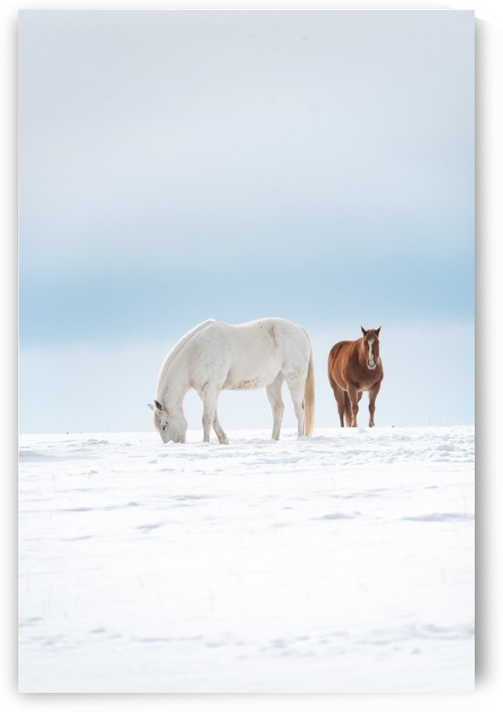 Winter Horses by Brent Mckean