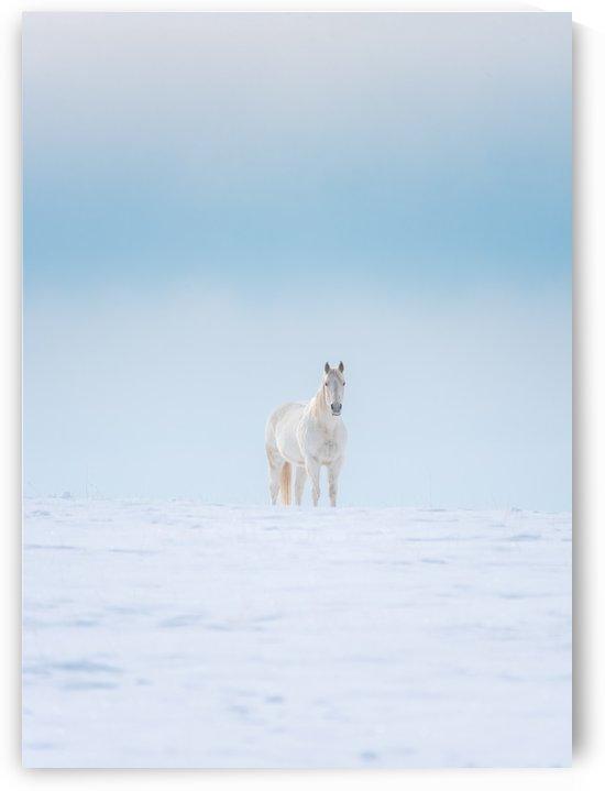 White Horse by Brent Mckean