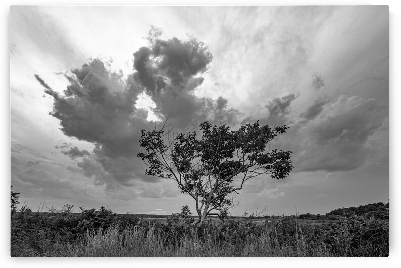 Storm over the Marsh by Dave Therrien