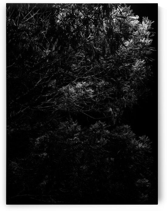 Arbre de Nuit Rabat Mai 2015 - Tree by Night Rabat May 2015 by Jalil DAMDAMI