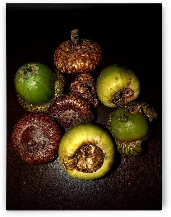 Acorn arrangement by BotanicalArt ca