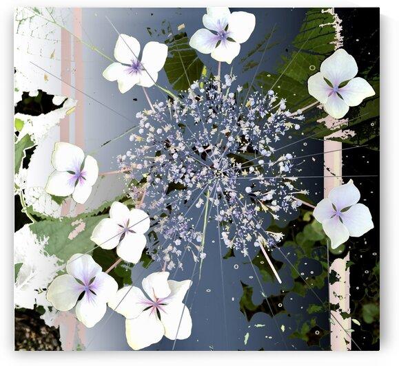 Lacy Hydrangea 200827 by BotanicalArt ca