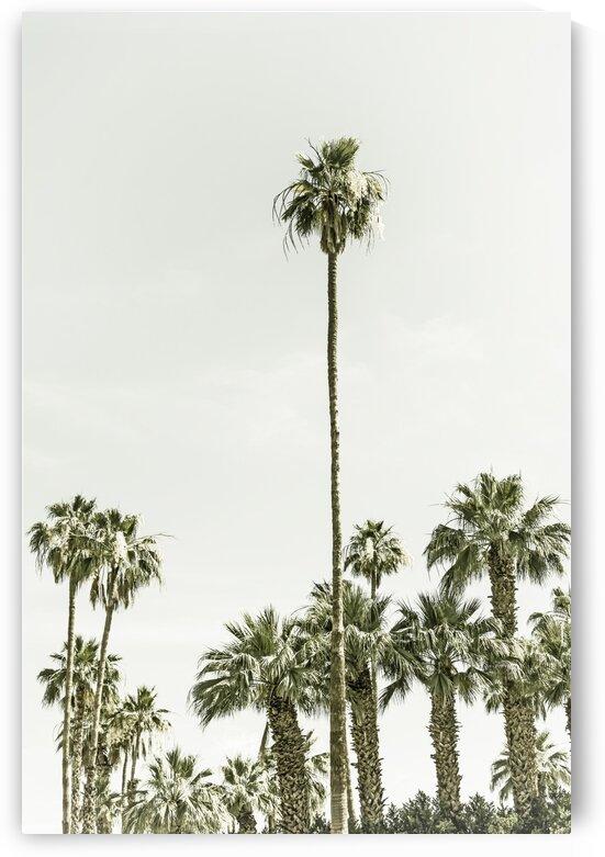 Palm Trees Summertime | Vintage by Melanie Viola