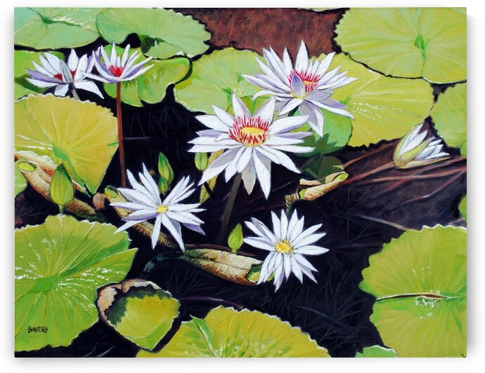 White Flowers on Lily Pads by Rick Bayers