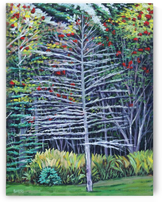 Bare Cedar in Woods with Red Flowers by Rick Bayers
