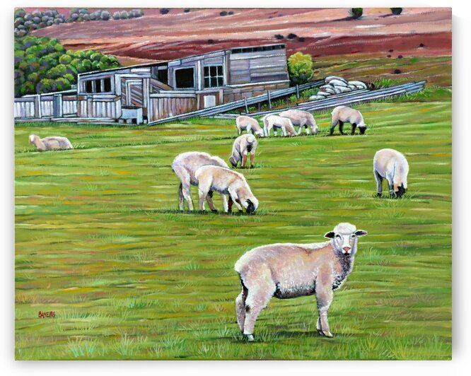 Sheep Grazing by Old Shed by Rick Bayers