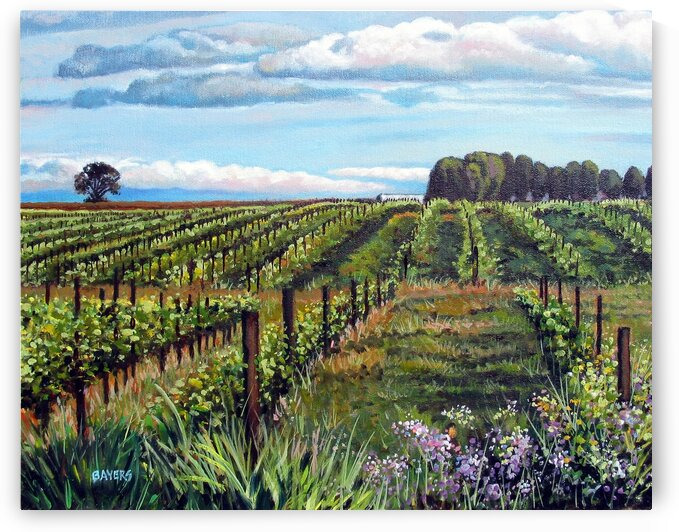 Sonoma Vineyards with Purple Flowers by Rick Bayers