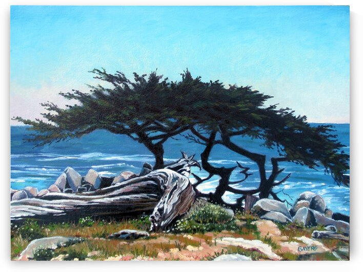 Lone Cypress Tree by Rick Bayers