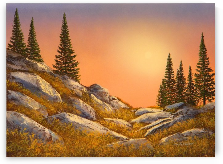 Sunset Spruces by Frank Wilson