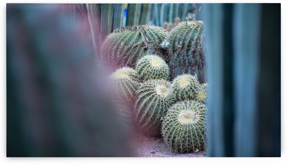 Cactus 02 Marrakech 2018 by Marion Xenia VALERS