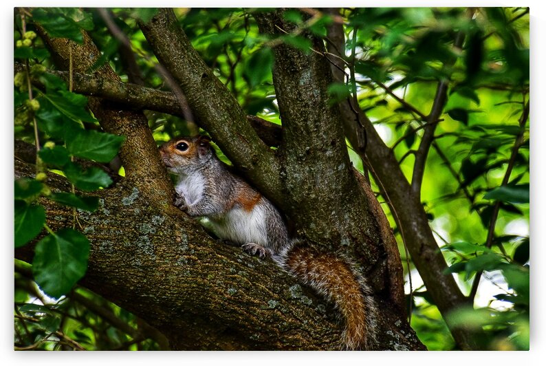 Young Squirrel by Tyler Smith