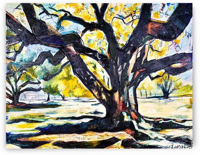 Louisiana Live Oak Tree by Caroline Youngblood