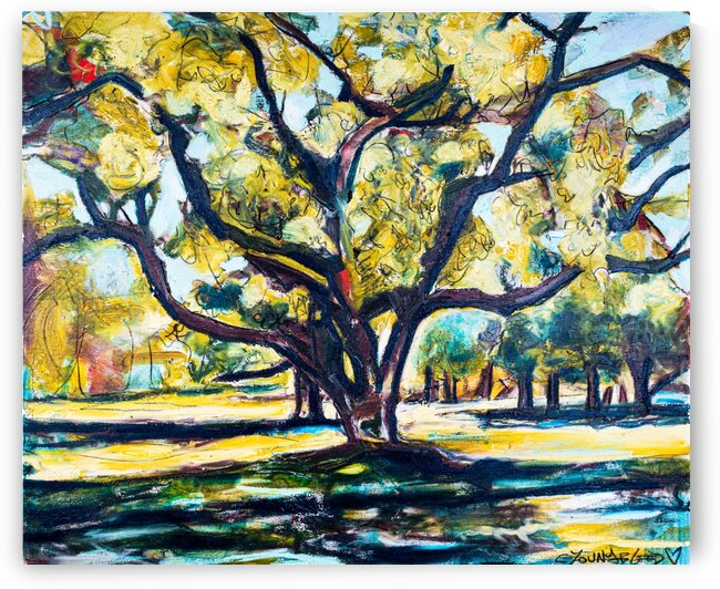 Louisiana Live Oak Tree IV by Caroline Youngblood