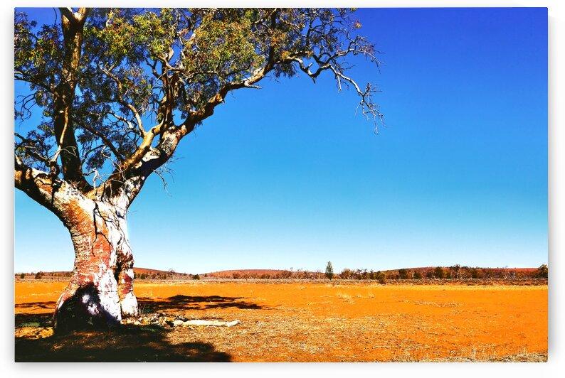 Gum Tree in the Flinders by Lexa Harpell