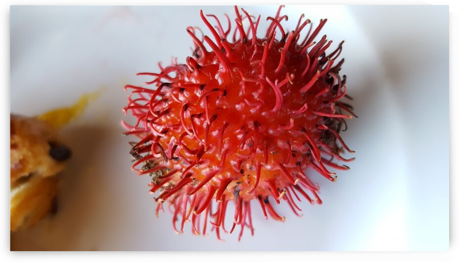 Rambutan Fruit  by Creative Endeavors - Steven Oscherwitz