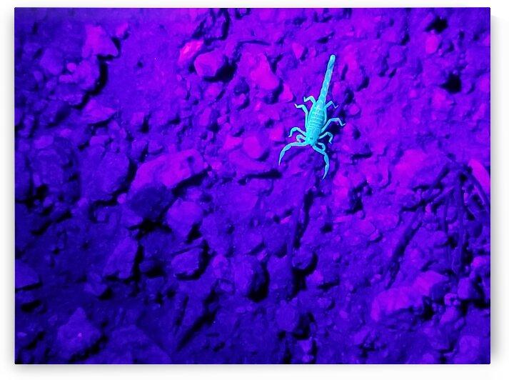 Centuroides Scorpion Under UV Light by Creative Endeavors - Steven Oscherwitz