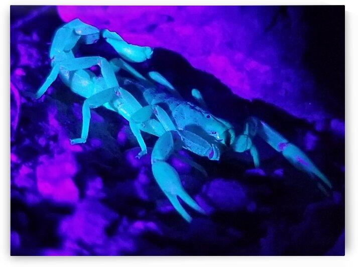 Fluorescent Scorpion by Creative Endeavors - Steven Oscherwitz