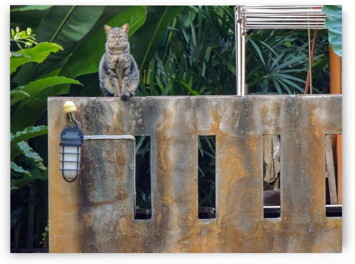 Cat on a fence by Dan Edel