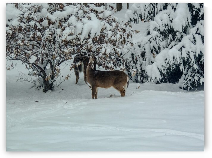 Winter snack by Dan Edel