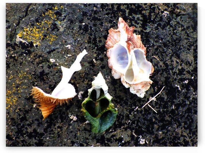 Broken Shells on Black Sand Beach by Creative Endeavors - Steven Oscherwitz