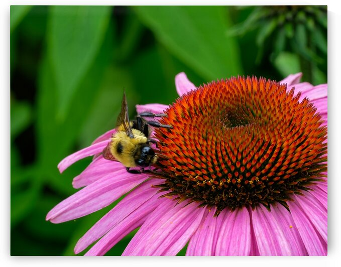 Bee by Javier Roa
