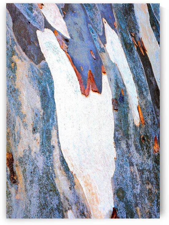 Gum Tree Bark - Flinders Ranges 1 by Lexa Harpell