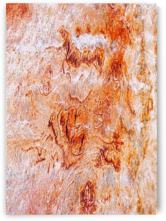 Gum Tree Bark - Flinders Ranges 8 by Lexa Harpell