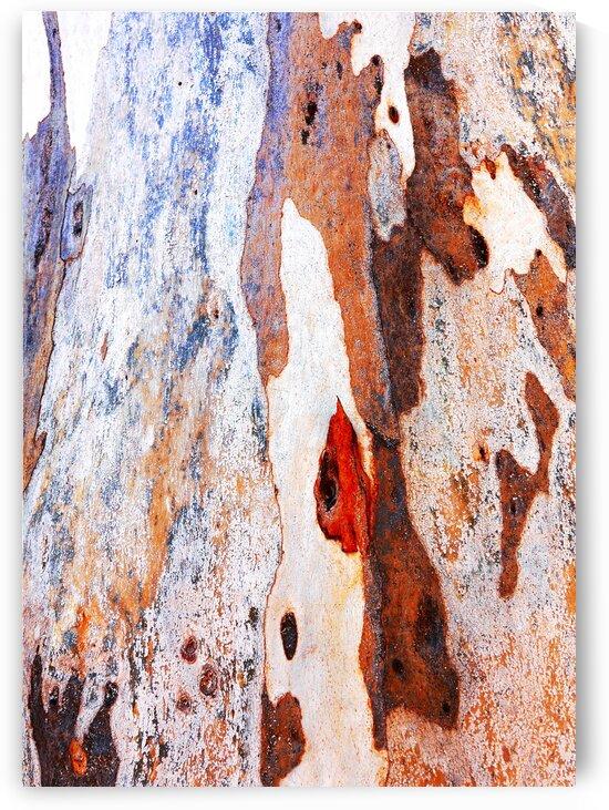 Gum Tree Bark - Flinders Ranges 7 by Lexa Harpell