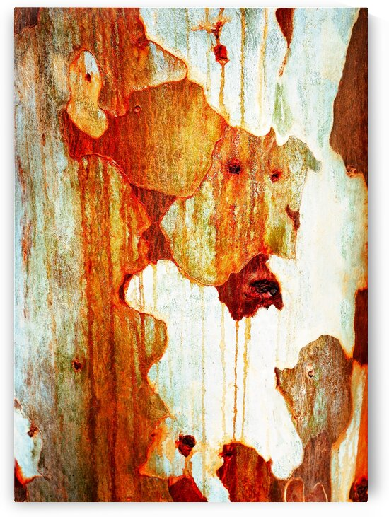 Gum Tree Bark - Flinders Ranges 11 by Lexa Harpell