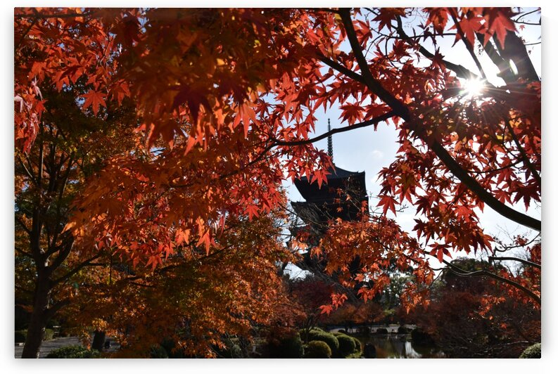 Toji Kyoto DSC_1449 by Onjin com