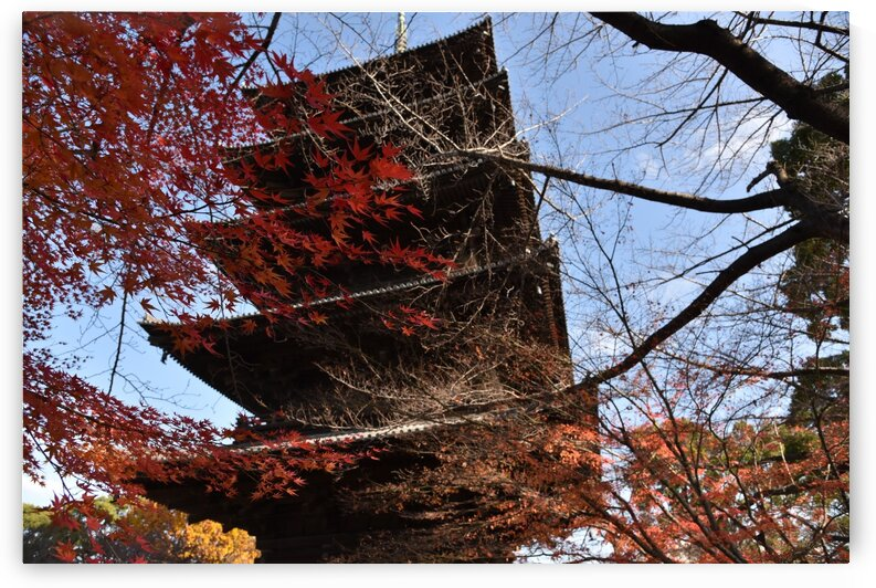 Toji Kyoto DSC_1487 by Onjin com