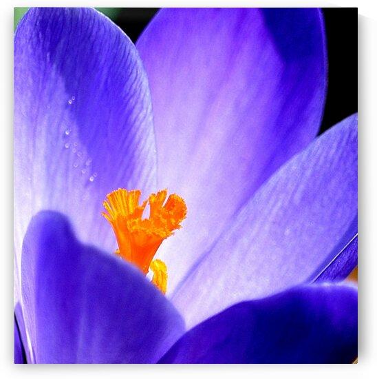Shining Blue by Joan Han