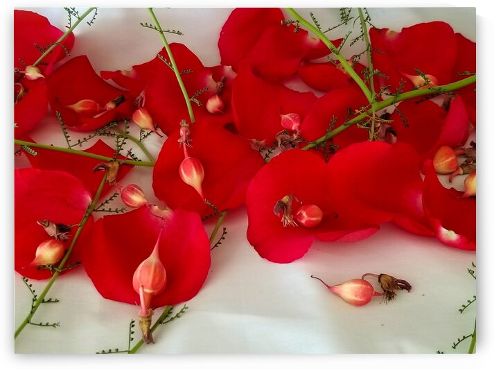 Deconstructed Rose Palo Verde and Lady Slipper by Creative Endeavors - Steven Oscherwitz