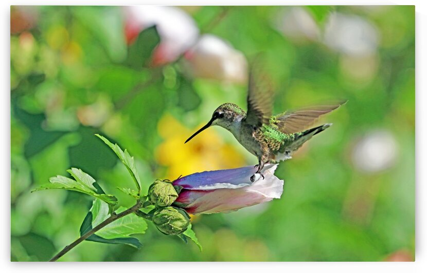 Green Kind Of Day With Hummingbird by Deb Oppermann