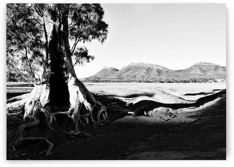 Sunrise - Cazneaux Tree BW by Lexa Harpell