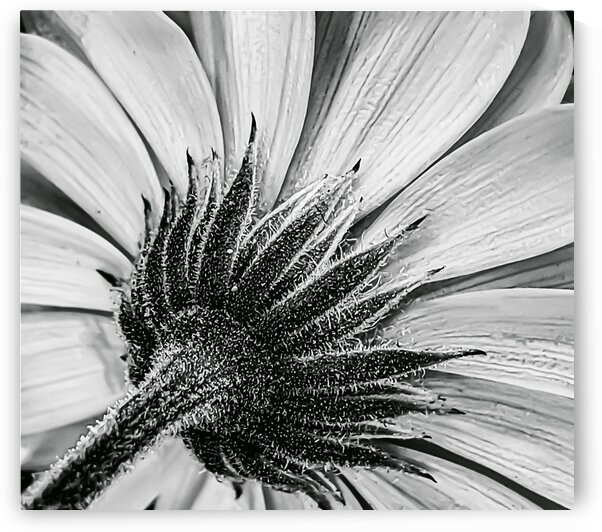 Back Brilliant Black and White by Joan Han