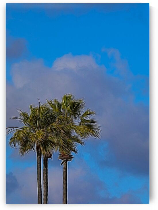 Palm Trees by Kaye