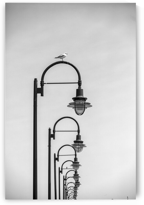 Light Poles by Kaye