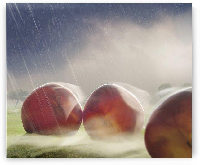 Giant peaches in foggy field by Elena Vizerskaya