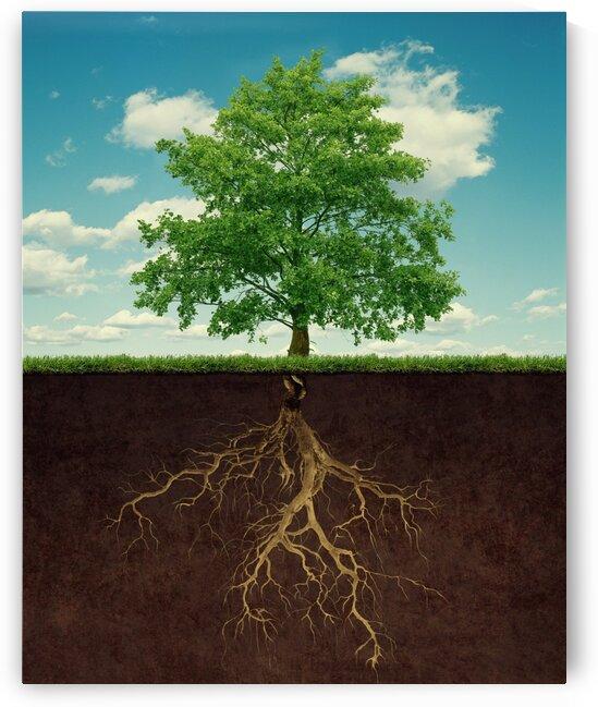 tree and roots by Elena Vizerskaya