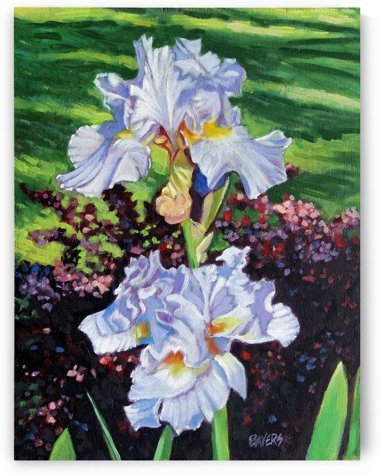 Two Light Blue Iris by Rick Bayers
