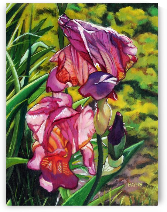 Two Red-Purple Iris by Rick Bayers
