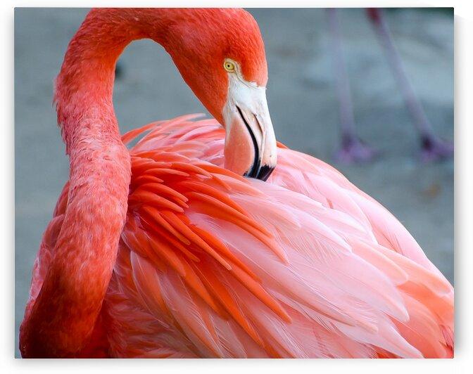 Flamingo by Harsh Patel