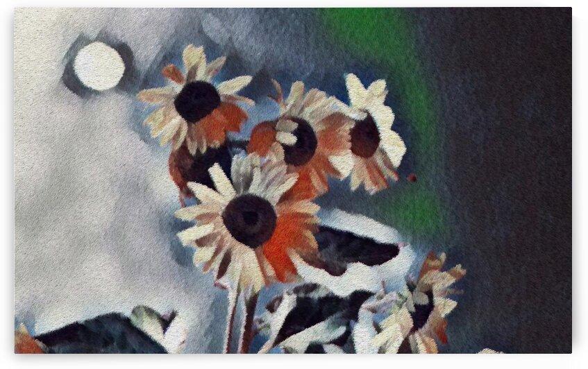 Sunflower in the Dark by Bob Frase