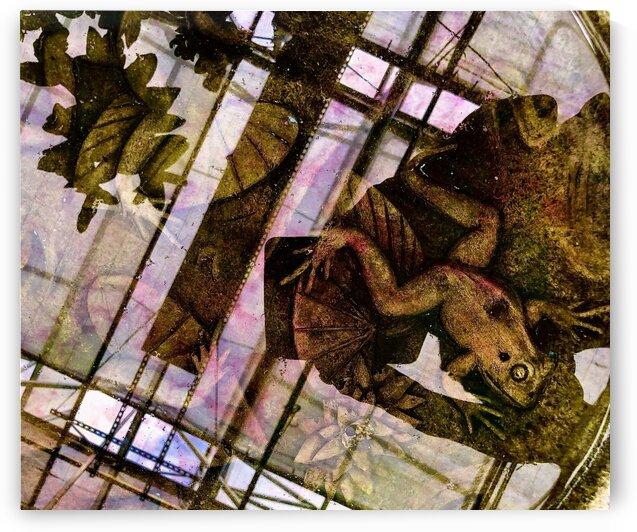 Frog in a Bird Bath by BotanicalArt ca