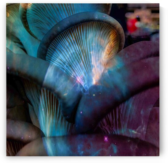 Oyster Mushroom Fantasy by BotanicalArt ca