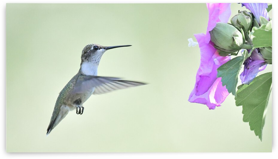 Hummer by Chris Seager