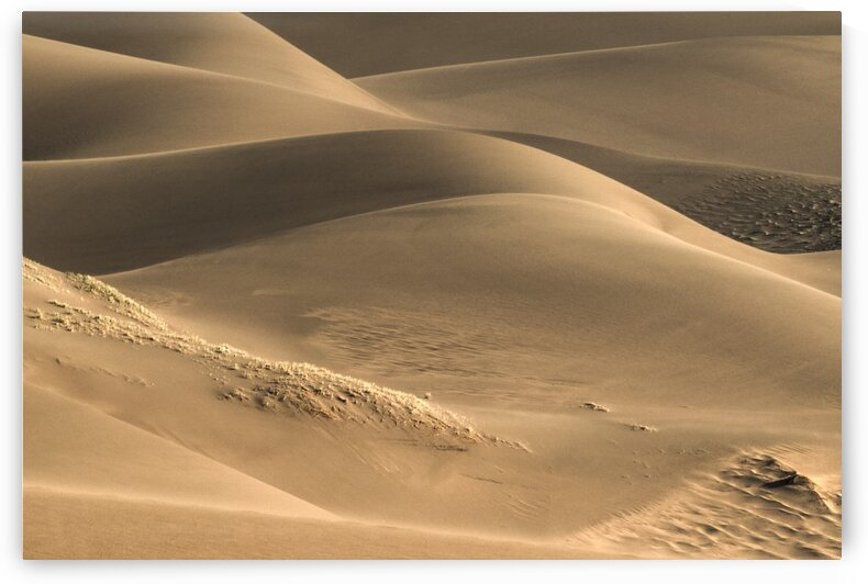 DUNES AND LIGHT by Bill Sherrell