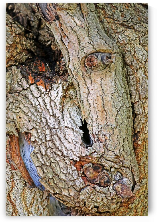 One Eyed Mulberry by Deb Oppermann